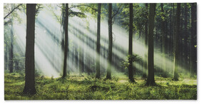 Light In The Woods 2