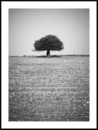 Olivträdet